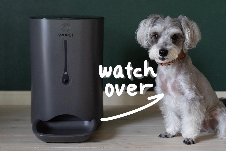 見える安心。ご飯をあげれる、スタイリッシュなペットカメラ。「WOPET Smart Pet Feeder」